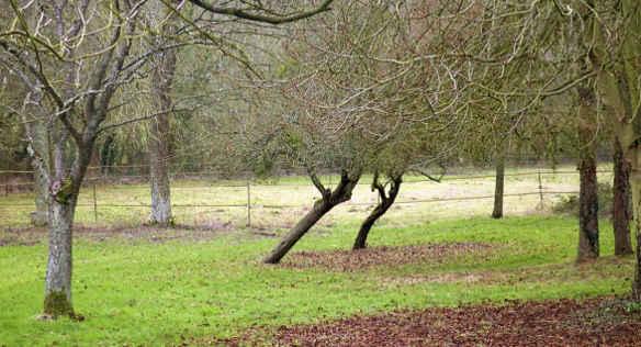 Les deux arbres au centre ont évolués de manière différentes des quatre autres